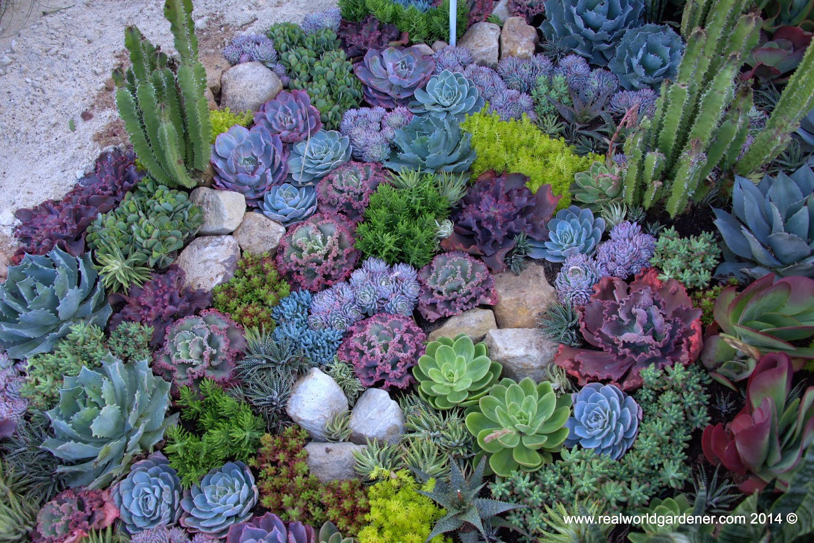 Real world gardener create a succulent garden in design for Gardening australia