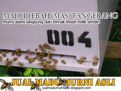 Lebah Pekerja Penghasil Madu