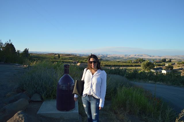 Naches Heights Vineyard. Yakima, WA