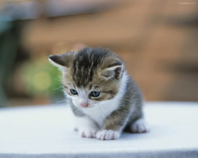 kucing galau berat