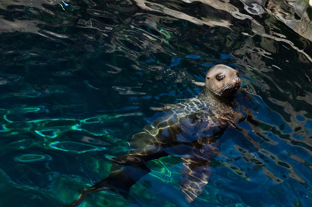 Vancouver Aquarium Favorites