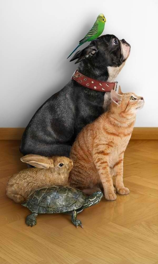A dog, cat, bird, rabbit and tortoise take a picture together