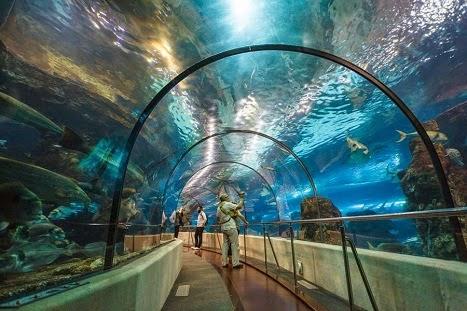 Το Μεγαλύτερο Θαλάσσιο Πάρκο της Μεσογείου. Ενυδρείο Βαρκελώνης