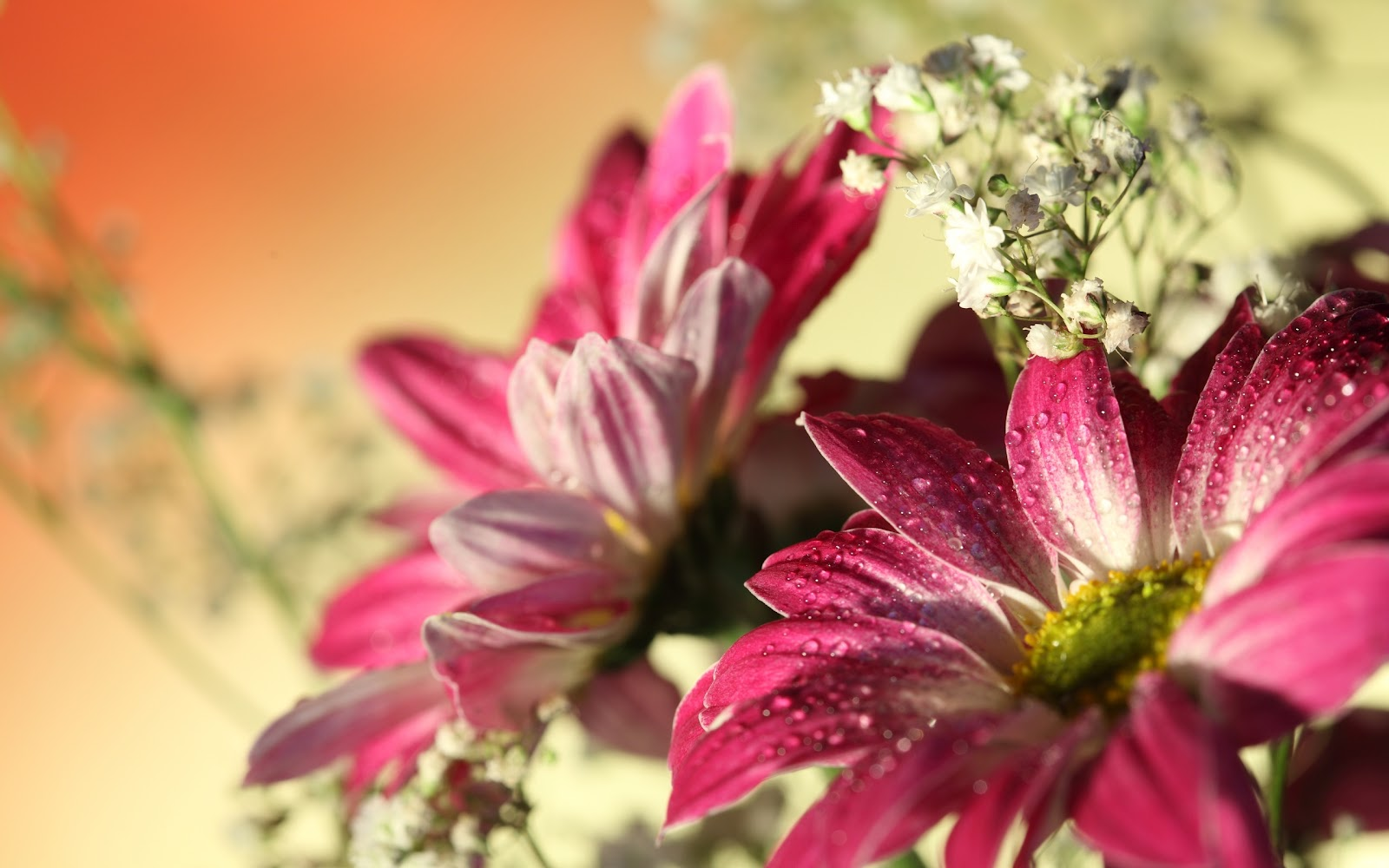 Fondos de Hermosas flores | Fondos de pantalla de Hermosas