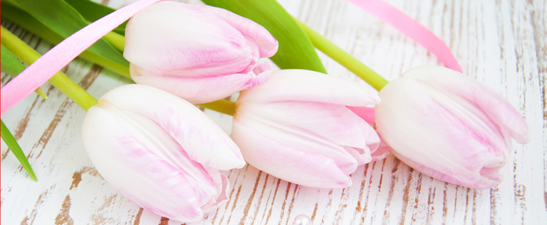 j'aime les tulipes