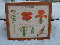 Botany poster vintage