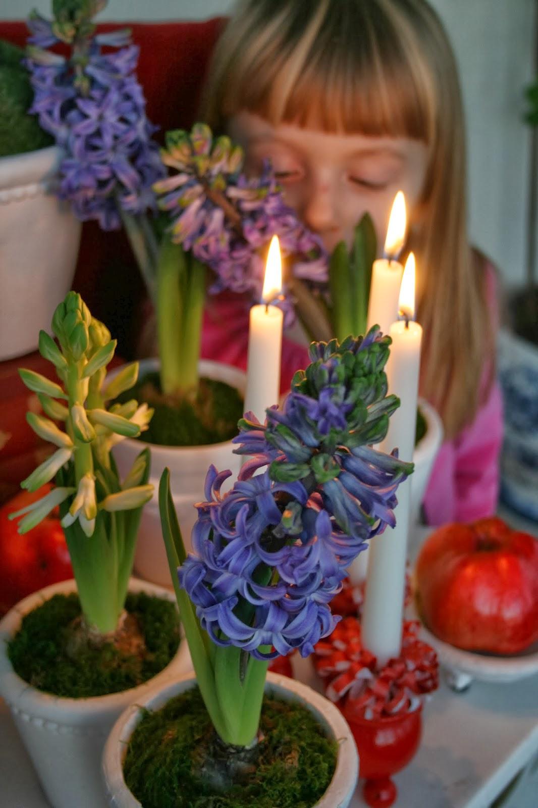 hyacint hyacinthus orientalis