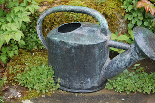 Even old watering can have a use.