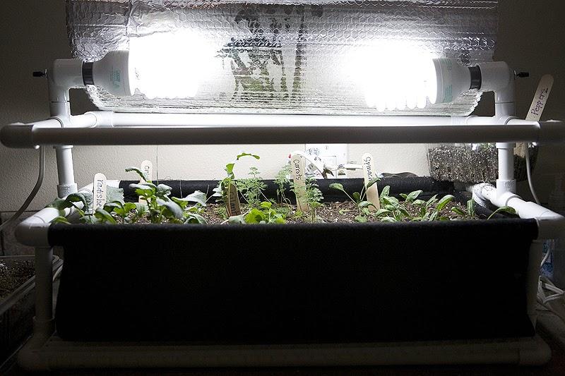 Lovely Backyard Farming Indoor Garden Box Fail