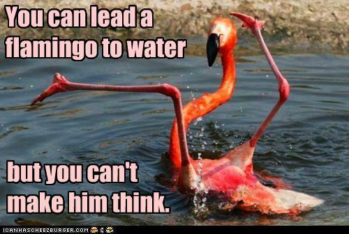 Go Back > Gallery For > Funny Flamingo Jokes