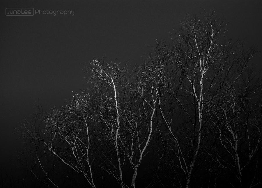Baumkronen, schwarz-weiß, Bild zum Gedicht