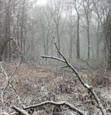 A Winter Wonderland, the forest at Ojibway freshly coated in falling snow.