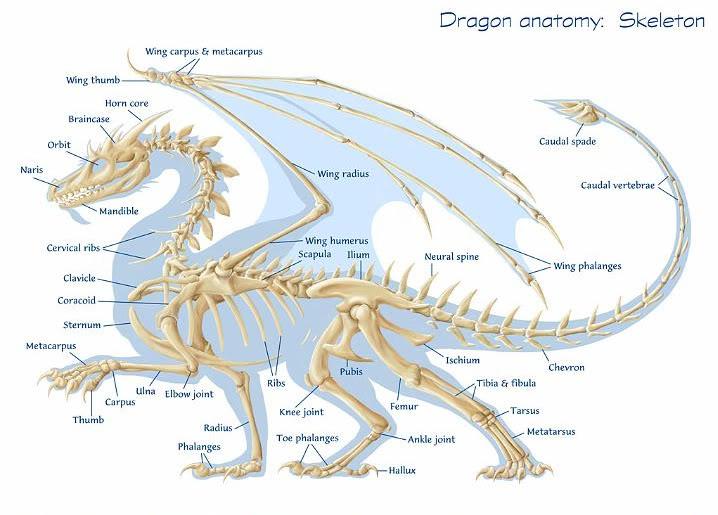 naga, dragon, fosil naga, fosil hewan purba, leak, dragon fire