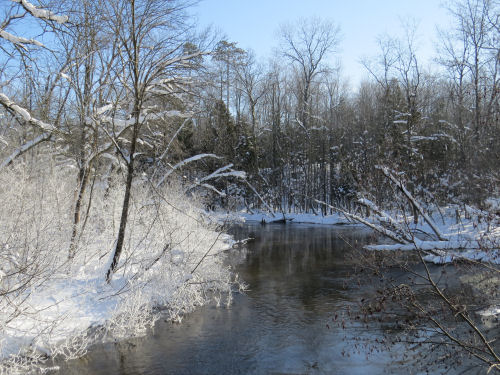 frost on Little Manistee River