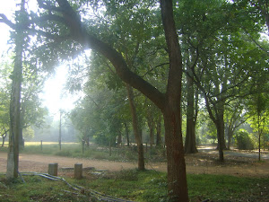 Tree-walk Snapshots