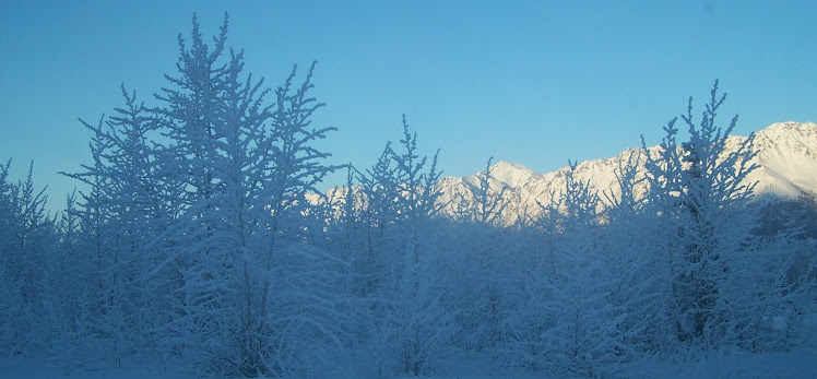 Alaskan Winter