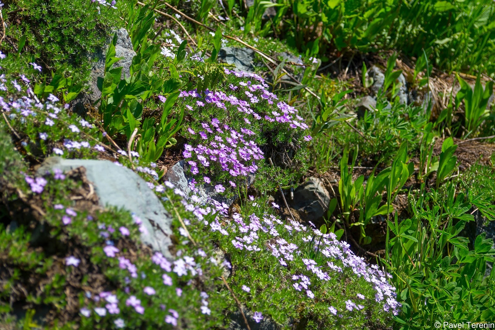 Мы застали бурное цветение, которым знамениты местные луга