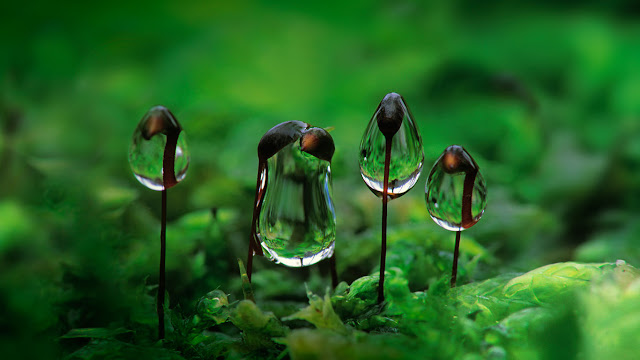 Water droplets on rough-stalked feather moss (© Duncan Usher/Minden Pictures)