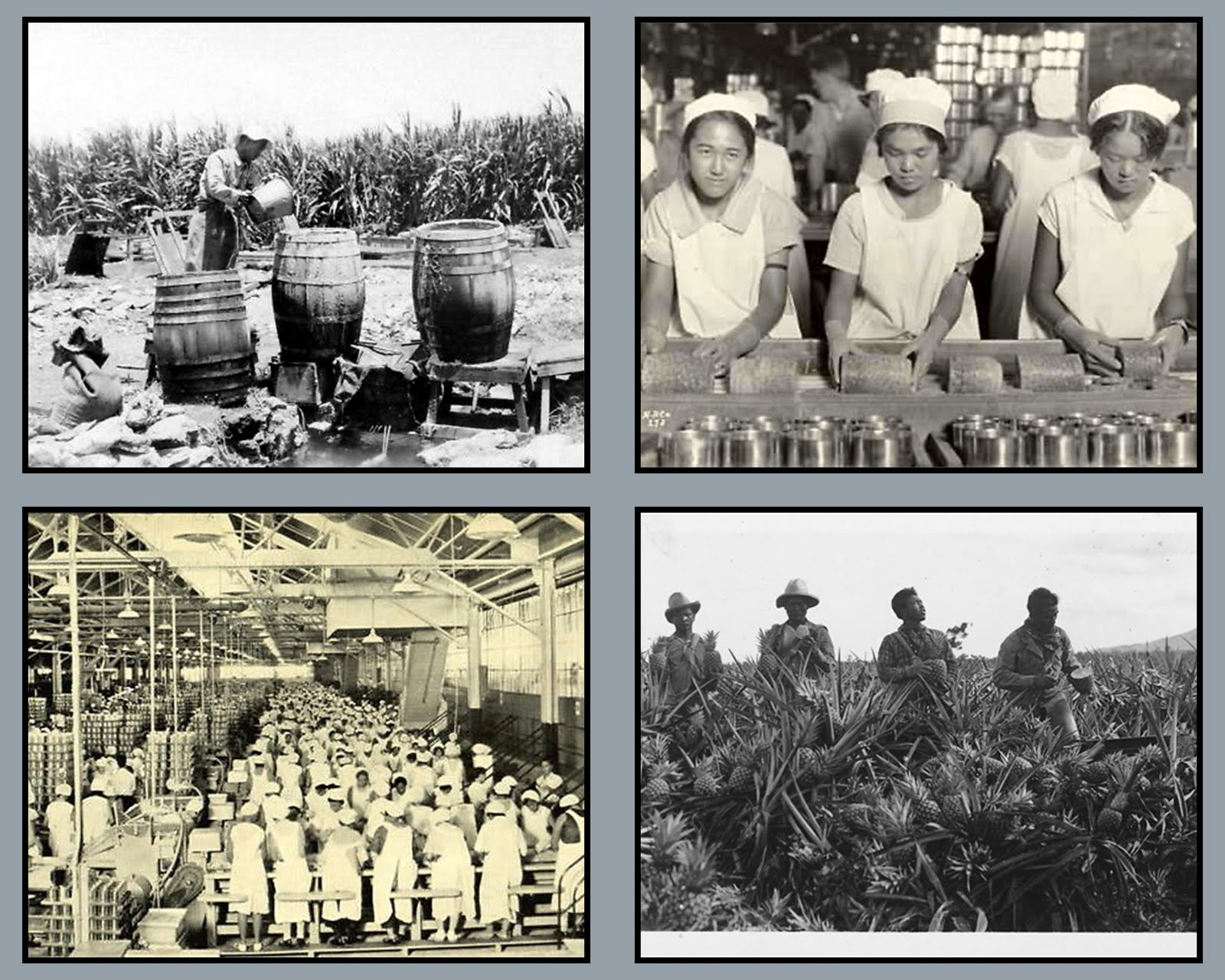 http://4.bp.blogspot.com/-aiXD55PixUQ/TXO_HtiYWDI/AAAAAAAAEeU/59lSjx7rAT4/s1600/Plantation%2Bworkers.jpg