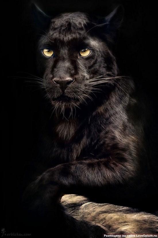 Spirits Of This World The Spirit Of Jaguar