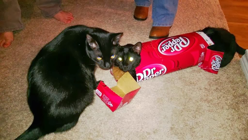 Funny Cat Drinking Meme : Funny cats part pics gifs amazing creatures
