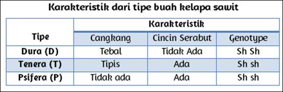 Karakteristik buah kelapa sawit