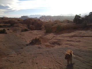 Scout above the Poison Spider slickrock ledges, with Moab Rim and the La Sal Mountains