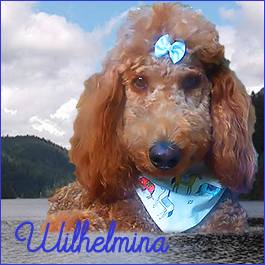 Wilhelmina