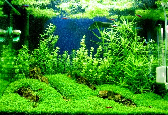 Mengenali Parameter CO2 Aquascape