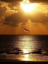 O infinito mar