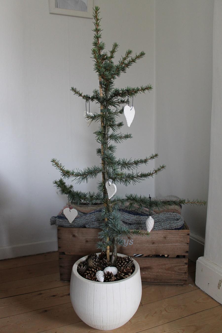 køb cedertræ i potte