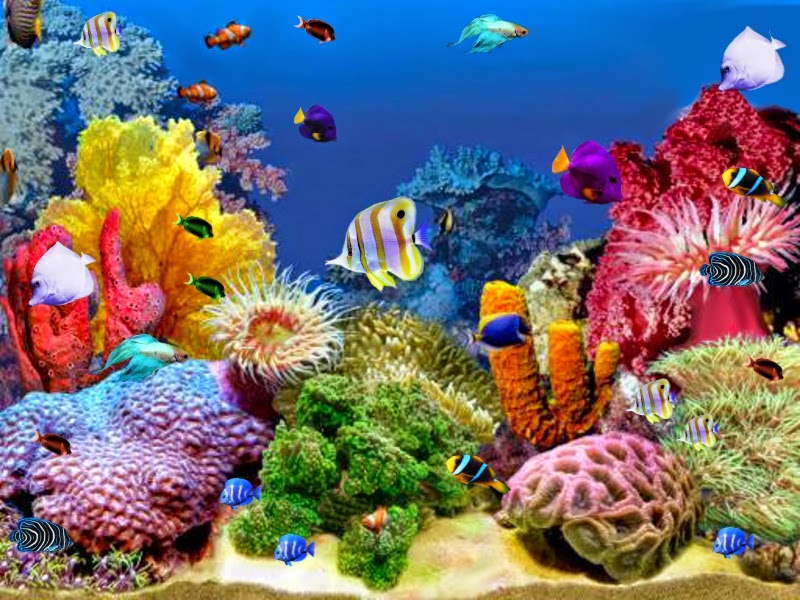 Tropical ornamental fish aquaria details you must know for Ornamental fish