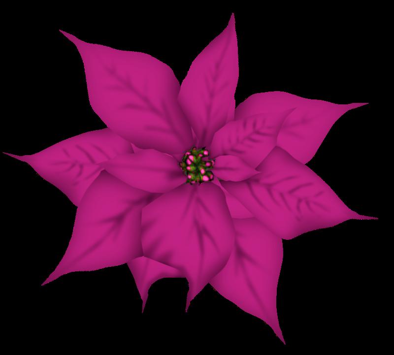 Gifs y fondos pazenlatormenta flores de navidad - Imagenes flores de navidad ...