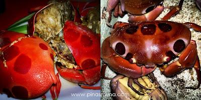 Onse Onse Crab a specialty of Magalawa Island in Palauig Zambales