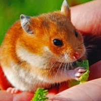 Activeness enrichment for rodents: how to tally a happier, healthier pet