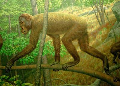 hominidae extintos Khoratpithecus