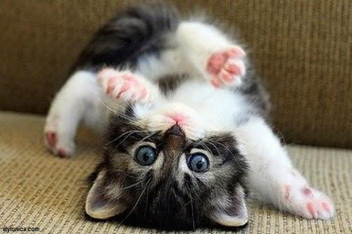 Adorable photo chat mignon