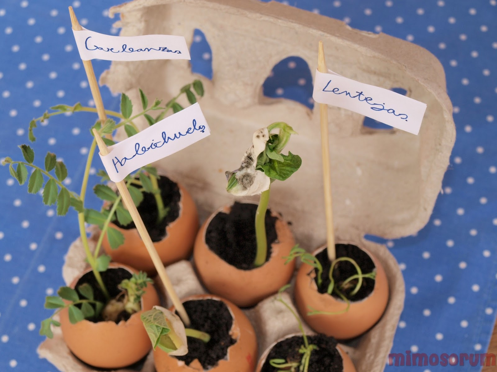 Mimosorum - Manualidades de jardineria ...
