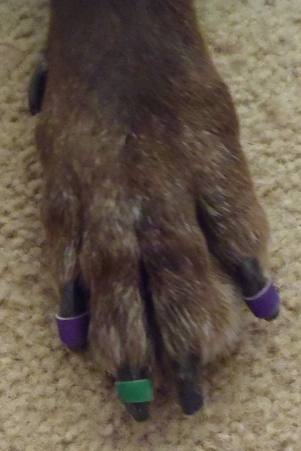 Becky S Blog Lots Of Fun Shtuff Review Of Dr Buzby S Toe Grips