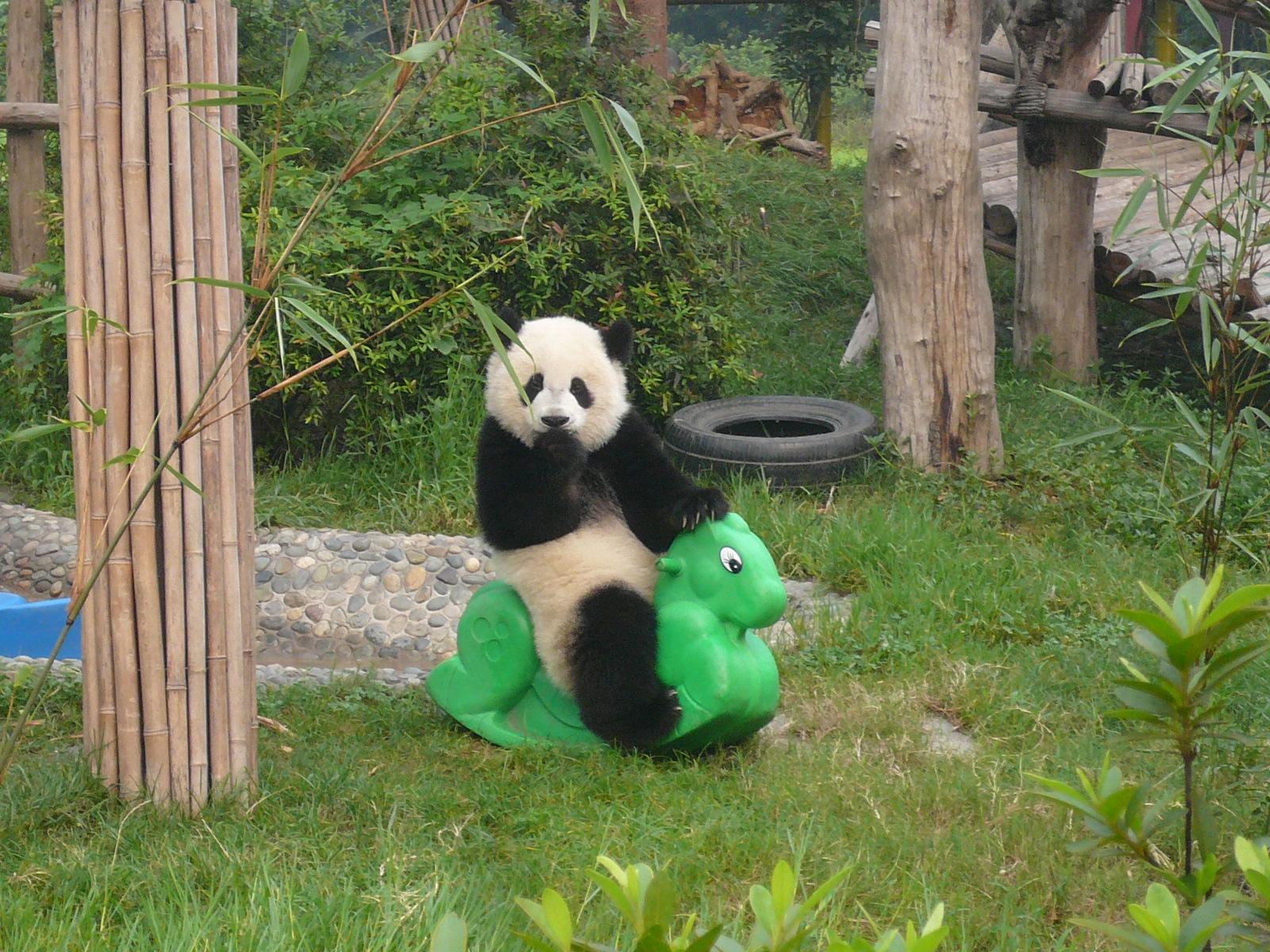 Encyclopaedia of Babies of Beautiful Wild Animals: Giant Panda ...