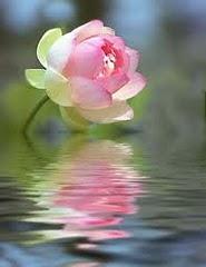 Reflexão através da Consciência Personalizada e Especial para Você
