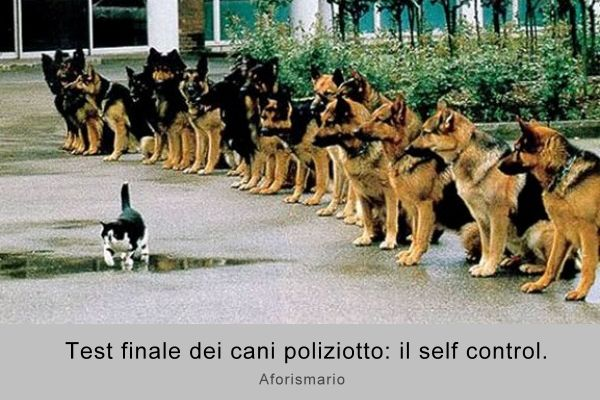 Assez Aforismario®: Cani e Gatti a confronto - Frasi canine e feline WQ87