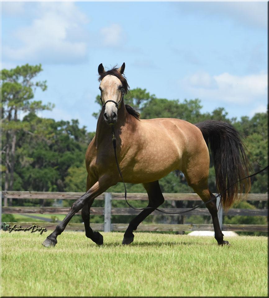 Visit our Sales Horses