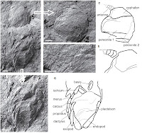 http://sciencythoughts.blogspot.co.uk/2013/07/a-fossil-isopod-crustacean-from-early.html