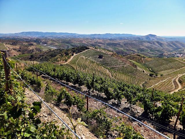Vinhos de Lote e Monocastas - reservarecomendada.blogspot.pt