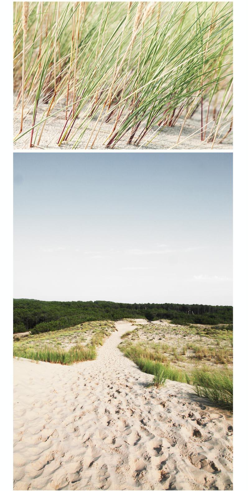 dune de sable herbes folles