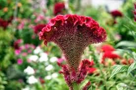 Ramuan Herbal Untuk Penyakit Miom