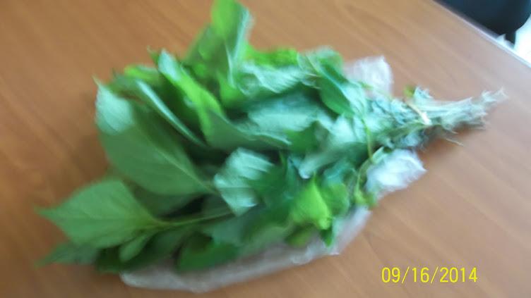 Green Leafy Vegetable