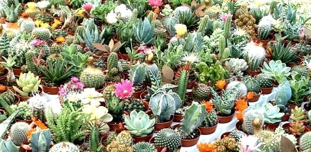 Maggio 2013 piante in fiore e il mio giardino fiorito for Giardino fiorito