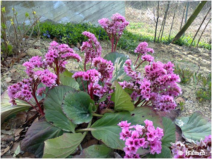 Sogni senza tempo aprile 2014 for Fiori di primavera